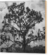 Heron In Pine Wood Print