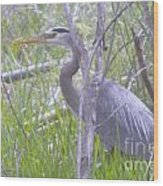 Heron In The Shade  Wood Print