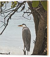 Heron Wood Print by Jane Rix