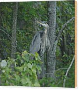 Heron On A Limb Wood Print