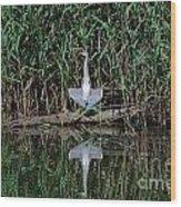 Heron Sunbath Wood Print