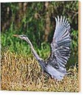 Heron Taking To Flight Wood Print