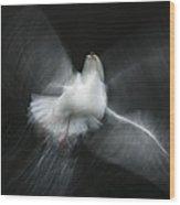 Herring Gull Abstract Wood Print