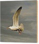 Herring Gull Larus Argentatus Wood Print