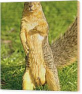 Hey Buddy Have You Seen My Nuts Wood Print by James Marvin Phelps