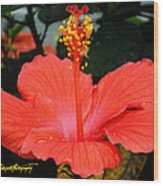 Hibiscus Bowl Wood Print