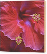 Hibiscus Duo Wood Print