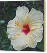 Hibiscus Faded Beauty Wood Print