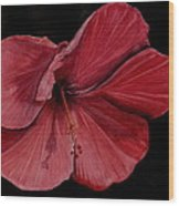 Hibiscus Happiness Wood Print