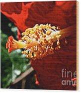 Hibiscus Highlight Wood Print