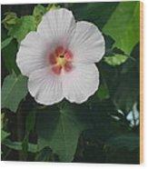Hibiscus In Panama Wood Print