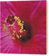 Hibiscus Macro Wood Print by Joe Carini - Printscapes