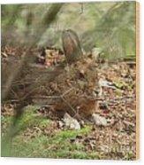 Hidden Hare Wood Print