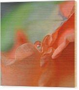 Hidden Pearl Wood Print