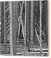 Hidden Shelter Wood Print