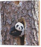 Hiding Wood Print