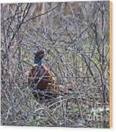 Hiding Pheasant Wood Print