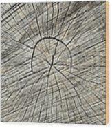 Hieroglyphics Wood Print