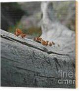 High Country Mushrooms Wood Print