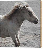 High Spirited Pony Wood Print