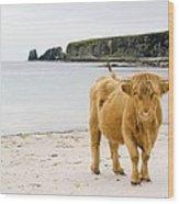 Highland Cow On A Beach Wood Print