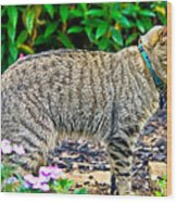Highland Lynx Cat In Garden Wood Print