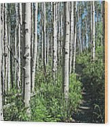 Hiking Through Aspens At Beaver Creek Wood Print