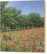 Hill Where A Poppy Bloom Wood Print