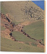 Hillside Erosion Caused By Run Wood Print