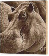 Hippo Of Khwai Wood Print