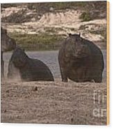 Hippos And Baboons Wood Print