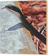 Hiss With Forked Tongue Wood Print by Artistic Photos