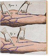 Historical Illustration Of Blood Vessels Wood Print