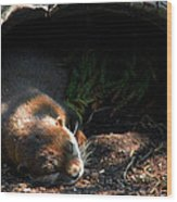 Hit The Otter Snooze Wood Print