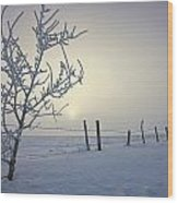 Hoar Frost Covering Trees And Barbed Wood Print