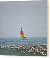 Hobie Cat Wood Print