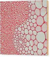 Hogweed Stem Wood Print