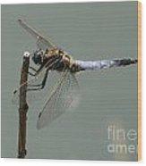 Hold On My Dear Dragonfly Wood Print