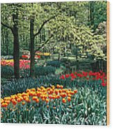 Holland Kuekenhof Garden Wood Print