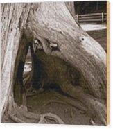 Hollow Tree Wood Print