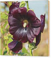 Hollyhock 7193 Wood Print