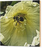 Hollyhock Collecter Wood Print
