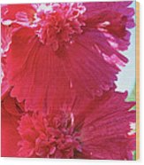 Hollyhock Duet Wood Print