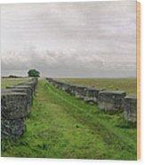 Holy Island Barriers Wood Print