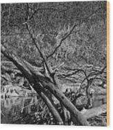 Holy Tree Wood Print