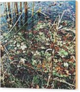 Homage To Monet Wood Print by Todd Sherlock