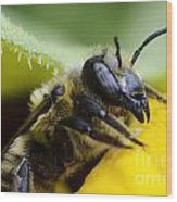 Honey Bee 2 Wood Print