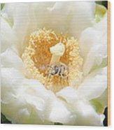 Honey Bee In Cactus Wood Print