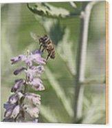 Honey Bee In Flight On Lavender Wood Print