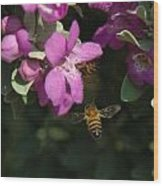 Honey Bees On Sage 3 Wood Print